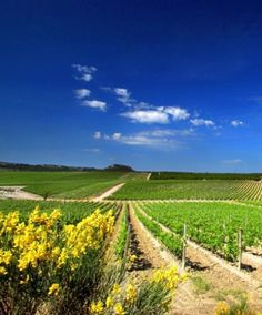 Languedoc Winery Weekend #offer. Chateau l'Hospitalet offers you the ideal location for a relaxing retreat