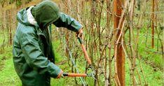 Grădinărit Archives - Page 2 of 18 - Fasingur Garden Tools, Gardening, Laptop Stickers, Farmer, Interiors, Plant, Life, Yard Tools, Lawn And Garden