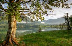 Lake Bohinj Slovenia | Bohinj lake Slovenia 1 830x534 Bohinj lake, Slovenia