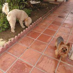 Ratos en casa con Bubu, Thais y Odin 06/17