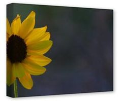 Gallery Wrapped 11x14x1.5  Canvas Art - Shining Through
