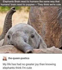 17 Fresh Animal Memes Guaranteed To Make Your Day Better - Elefanten - Funny Cute Funny Animals, Funny Animal Pictures, Cute Baby Animals, Funny Cute, Super Funny, Funny Pics, Wild Animals, Cute Elephant Pictures, Cute Animal Memes