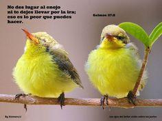 Los ojos del Señor están sobre los justos...Salmos 37:8