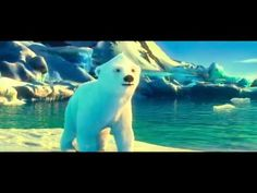 Vidéo animation ours polaires