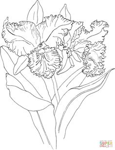 coloring pages of orchids   coloring page to view printable version or color it online compatible ...