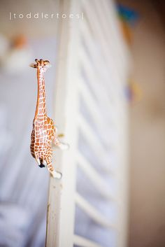 nice perspective of tiny giraffe
