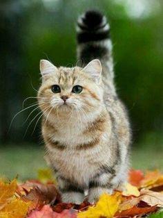 #CAT##ANİMALS##CUT##PETS#