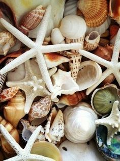 An excellent tutorial on how to clean sea shells of the florida ...