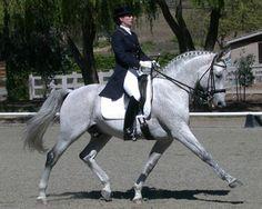 Legacy -- Dressage horse.