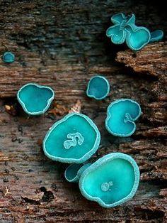 Mushroom Pictures, Slime Mould, Plant Fungus, Mushroom Fungi, Patterns In Nature, Amazing Nature, Flora, Stuffed Mushrooms, Texture