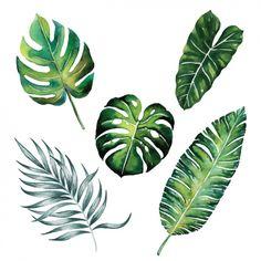 Colección de hojas en acuarela Vector Gratis
