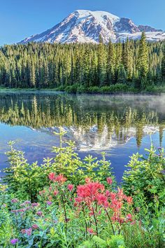 Rainier Wildflowers At Reflection Lake by Pierre Leclerc Photography Purple Mountain Majesty, Kansas Missouri, Mount Rainier National Park, Washington State, Wyoming, Vermont, Wild Flowers, North America, Reflection