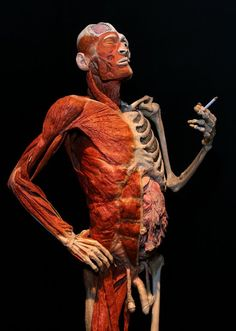 Our body. Our World: The Body Worlds Exhibition