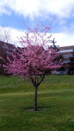 El primer árbol en florecer!