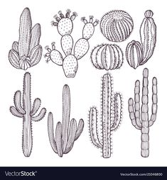 Cost wild cactus plants Thoughts Succulents in addition to cacti are definitely the great residence decoration regarding minimalists plus craz Cactus Drawing, Cactus Art, Cactus Flower, Cactus Plants, Indoor Cactus, Cacti, Cactus Painting, Hand Illustration, Stampin Up