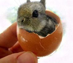 Tiny bunny rabbit...