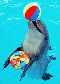 Dolphin photo via Cayman Islands Dolphin Park