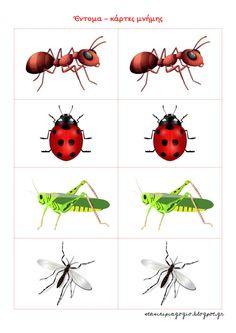 έντομα νηπιαγωγείο