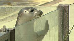 Seehundstation platzt aus allen Nähten