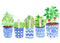 Lovely Potted Plants by Caitlin McGauley #watercolor