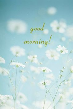 Beautiful Good Morning Card for Media with White Delicate Flowers