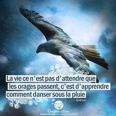 Citation Sénèque, La vie ce n'est pas d'attendre que les orages passent, c'est d'apprendre comment danser sous la pluie. #citation #citations #quotes #Seneque #vie #orage #danse