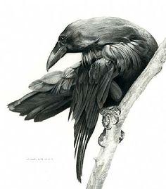 un cuervo y bien retratdo no como esos politocos que vemos a diario…
