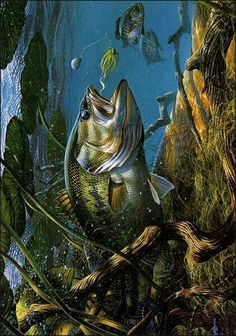 Bass Fishing Shirts, Bass Fishing Lures, Fly Fishing, Fishing Tattoos, Underwater Animals, Underwater Fish, Fish Wall Art, Fish Art, Bass Fishing Pictures