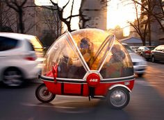An electric tricycle sounds like a brilliant idea! (spotted on the streets of Beijing)