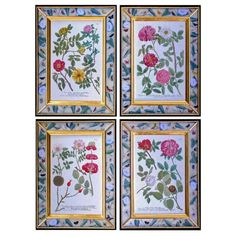 Rare Set of Four Johann Weinmann Engravings of Roses | 1stdibs.com