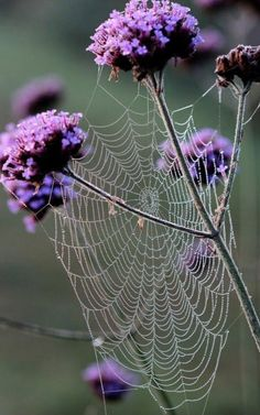 Purple flowers and spider web All Nature, Science Nature, Spider Art, Spider Webs, All Things Purple, Belle Photo, Beautiful World, Simply Beautiful, Flower Power