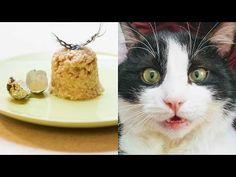 EV YAPIMI SAĞLIKLI KEDİ MAMASI TARİFİ - (tavuk göğüs + bulgur + bıldırcın yumurtası) YouTube Cat Recipes, The Creator, Cats, Youtube, Bulgur, Gatos, Cat, Kitty, Youtubers