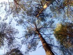 W lesie nad jeziorem Kimsza, które jest między Pogorzelcem a Białorzeczką.