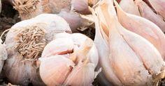 Garlic, Organic, Vegetables, Solar, Gardening, Home, Agriculture, Plant, Farm Gate