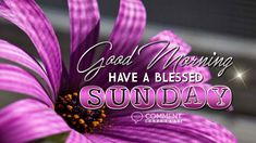 Good Morning Have a Blessed Sunday | Sunday Graphics | Sunday Comments, Pics, Images for Facebook, Twitter, Myspace, Pinterest, Instagram, Fubar, Tagged