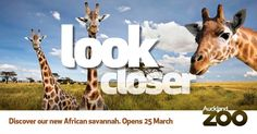 25 March, Auckland, Savannah Chat, Giraffe, Competition, Moose Art, Friday, Detail, Movie Posters