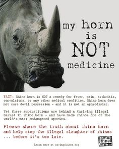 Poachers chop off the horn of live Indian Rhino at Kaziranga. Kill the trade that kills the Rihno.