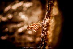 Nature / Canon EOS DIGITAL REBEL XSi 70-300mm | ISO 200  300 mm  1/100 sec at ƒ / 56 | | #nature #natureza #plant #plants #life #ronaldoichi #brazilianphotographer #photographer #photography #photo #fotografia #foto #brazil #park #scene #natural #naturalscene #outdoor