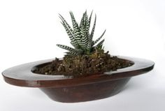 House Plants A-Z. Identification, care, tips,solutions, and how-to's.