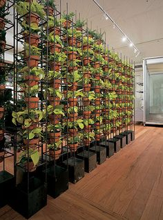Wall gardening -- interesting idea, though that's a lot of waterin' to do. http://http://www.schiavello.com.au/verticalgarden.htm