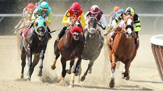 Are Horse Liniments Safe For Humans? | Top-Sports Magazine