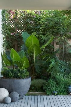 40 Small Courtyard Design with Some House Plants - Small courtyard gardens - Tropical Garden, Tropical Landscaping, Budget Garden, Plants, Small Courtyard Gardens, Small Backyard Landscaping, Tropical Backyard, Outdoor Gardens, Balinese Garden
