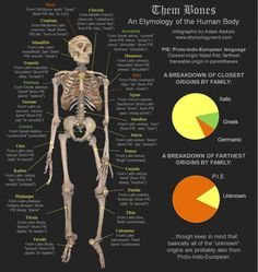Infographics - THE ETYMOLOGY NERD Search Engine Marketing, Seo Marketing, Meaningful Meaning, Old Norse, Favorite Words, Number One, Human Body, Skeleton, Nerd