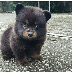 A cute little bear dog thing I don't know