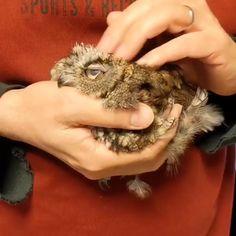 Like Animals, Cute Little Animals, Happy Animals, Animals And Pets, Funny Owls, Cute Funny Animals, Cute Cats, Owl Eyes, Cute Animal Videos
