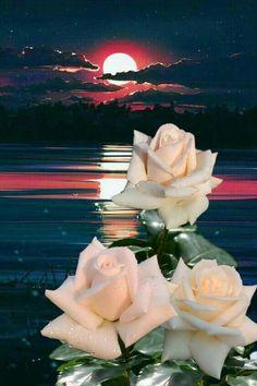Good Morning Beautiful Flowers, Beautiful Rose Flowers, Exotic Flowers, Beautiful Flowers Wallpapers, Beautiful Nature Wallpaper, Dove Pictures, Rose Flower Wallpaper, Spring Wallpaper, Rose Images