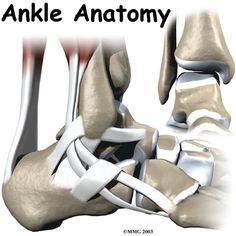 Ankle Anatomy Introduction