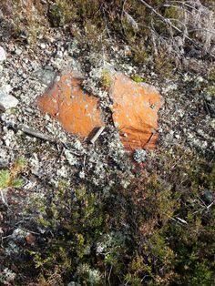 Stone, nice Firewood, Texture, Stone, Nice, Crafts, Nature, Woodburning, Manualidades, Nice France