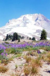 Mt. Hood - Oregon.  Makes me homesick.  Love this mountain...