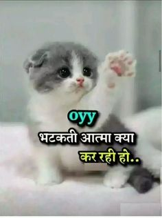 Beautiful Cat Pictures Images – Cute Cat Pic with Quotes – Cute Cat Images for WhatsApp DP Bff Quotes Funny, Funny Attitude Quotes, Funny Jokes In Hindi, Memes Funny Faces, Funny Picture Quotes, Sarcastic Quotes, Life Quotes, Funny Cat Captions, Cute Cat Memes